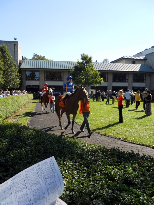 Nicki's Central West End Guide Events, Sightings travel  New Albany Kentucky Derby Keeneland IN