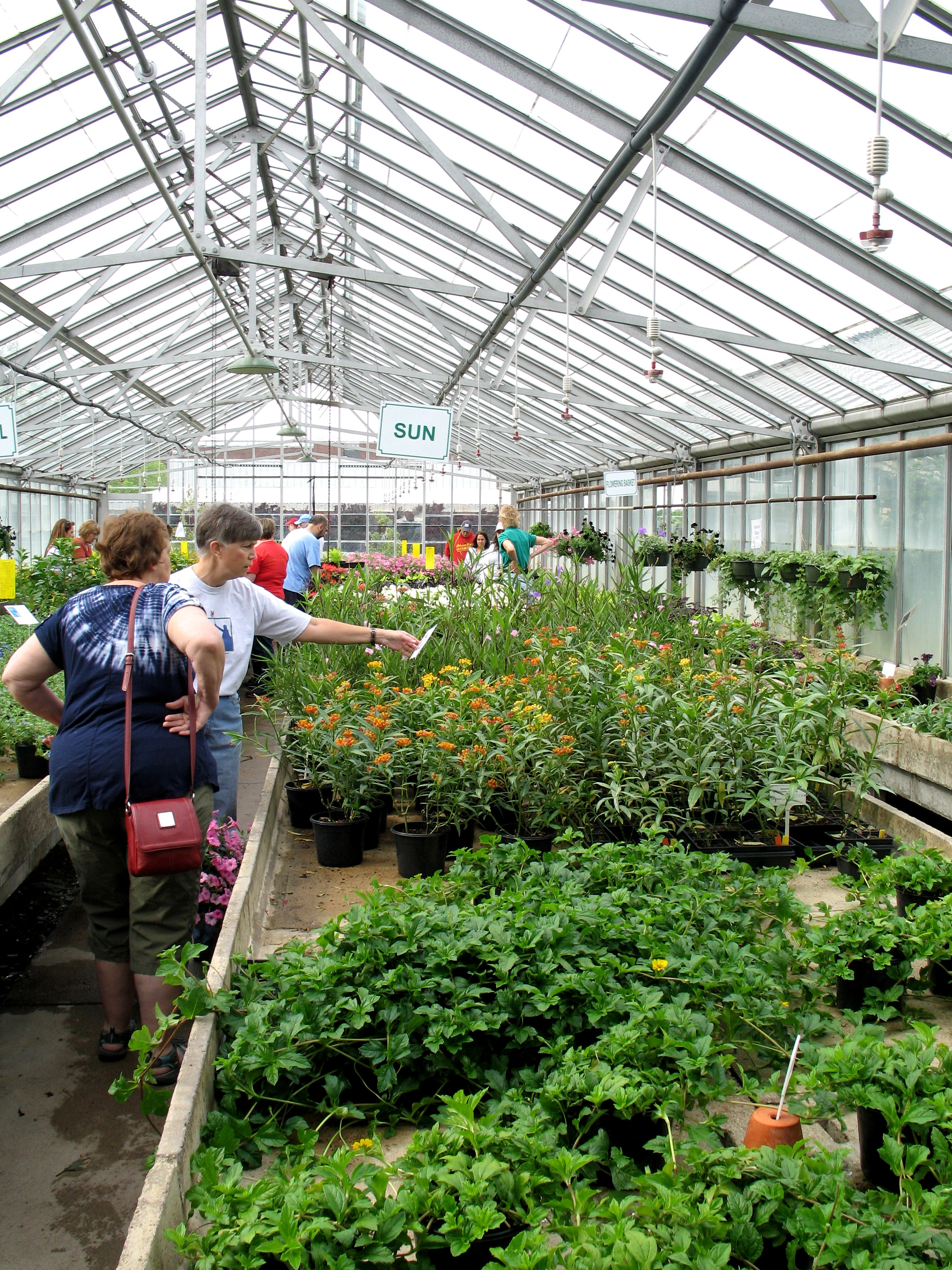 the flora conservancy of forest park s plant sale – nicki s