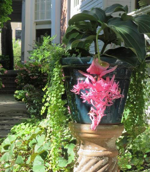 Nicki's Central West End Guide Urban Gardens